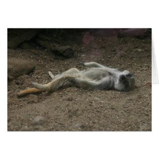 Sunbathing Meerkat Card