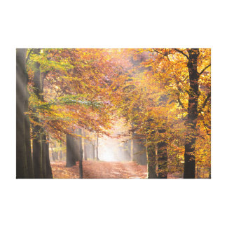 Sunbeams in an autumn forest canvas
