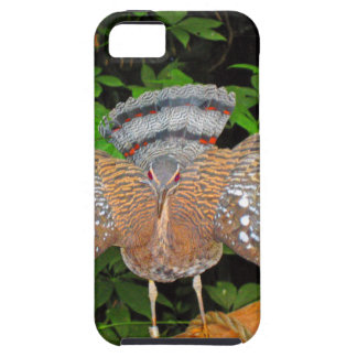 Sunbittern - Tropical bird iPhone 5 Covers