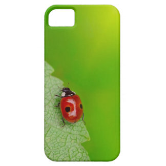 Sunburst above tiny ladybird climbing up a fresh case for the iPhone 5