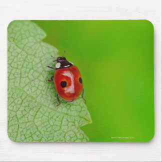Sunburst above tiny ladybird climbing up a fresh mouse pad