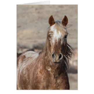 Sundance - Galloping to Freedom Greeting Card
