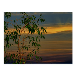 Sundown behind the tree postcards