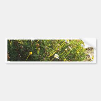 sundown daisy bumper sticker