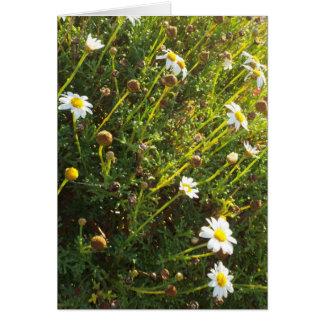 sundown daisy greeting card