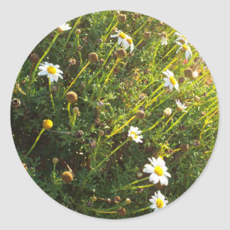 sundown daisy round sticker