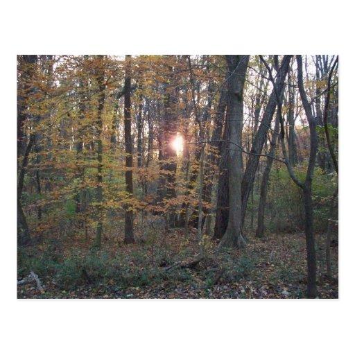 Sundown Forest Post Card