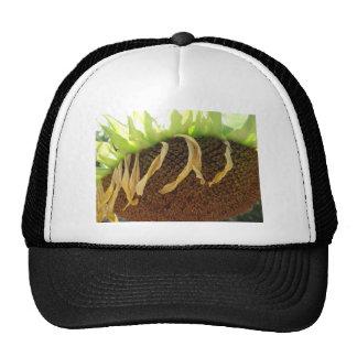 Sundown Trucker Hats