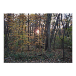 Sundown in the Woods Poster
