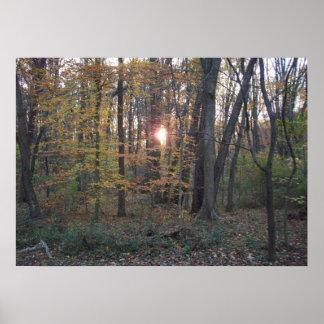 Sundown in the Woods Poster