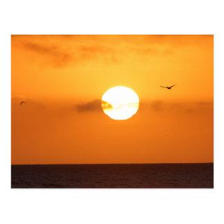 Sundown over the ocean: pelican postcard