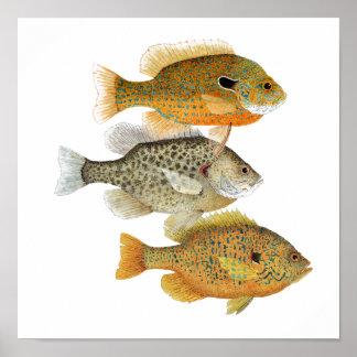 Sunfish Art Poster