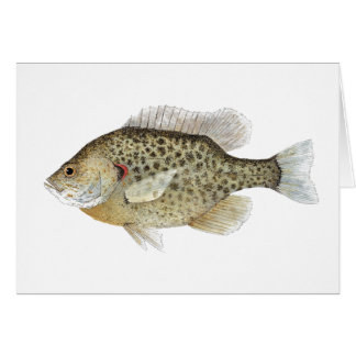 Sunfish Greetings Card