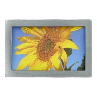 Sunflower 01.1rd, Field of Sunflowers Belt Buckles