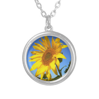 Sunflower 01.1rd, Field of Sunflowers Silver Plated Necklace