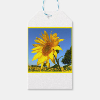 Sunflower 3.0, Field Of Sunflowers Gift Tags