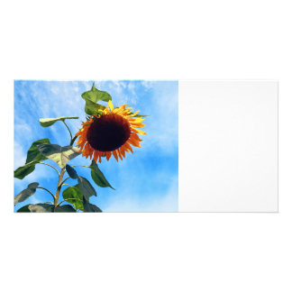 Sunflower and Sky Photo Cards