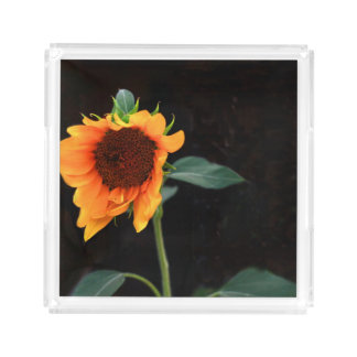 Sunflower bloom acrylic tray