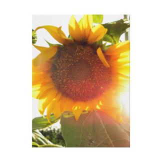 Sunflower Gallery Wrap Canvas