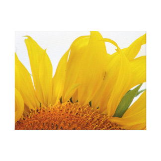 Sunflower Canvas Print Design One