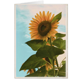 Sunflower Card - Blank