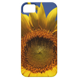 Sunflower Case For The iPhone 5