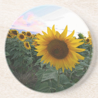 Sunflower Closeup Coaster