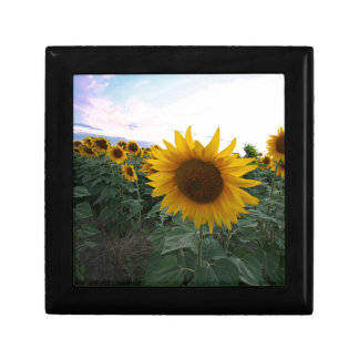 Sunflower Closeup Gift Box