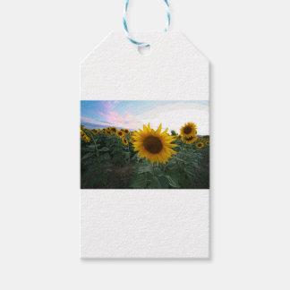 Sunflower Closeup Gift Tags