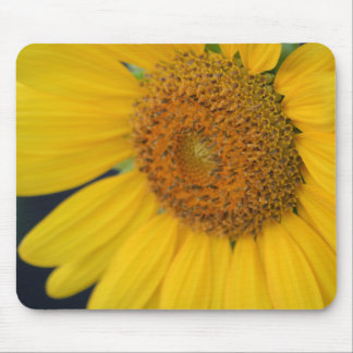 Sunflower Closeup mousepad