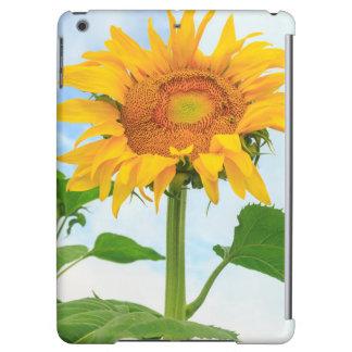 Sunflower, community garden, Moses Lake, WA, USA