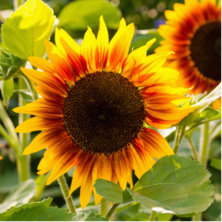 Sunflower Cut Outs