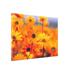 sunflower daisies canvas print