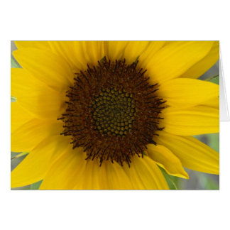 Sunflower Dark Center Card