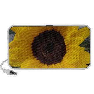 sunflower ddl speaker