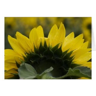 Sunflower Detail Card