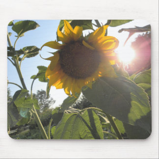 Sunflower Down Mouse Pad