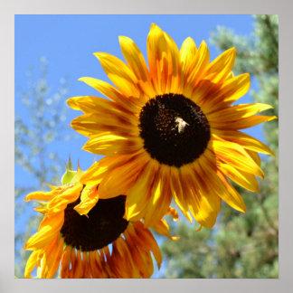 Sunflower Expression Print