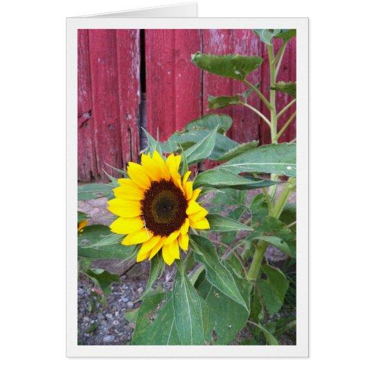 Sunflower Farm Notecard