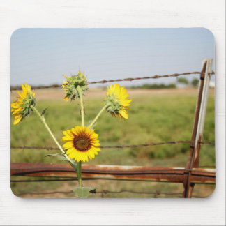 Sunflower fence mousepads