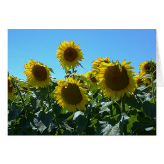 Sunflower Fest -- Card