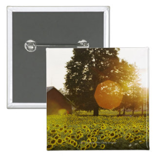 Sunflower Field At Sunset With A Barn 15 Cm Square Badge