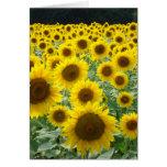 Sunflower Field Card