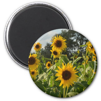 Sunflower Field Magnet