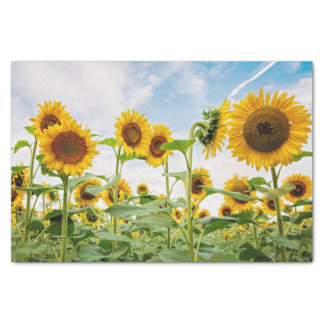 Sunflower Field Tissue Paper