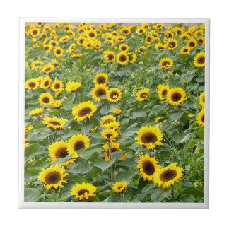 sunflower fields digital tile design
