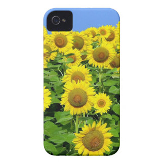 Sunflower Fields iPhone 4 Cover
