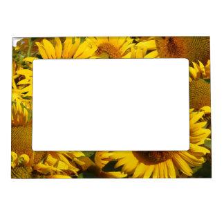 Sunflower Flowers Garden Floral Magnetic Frame