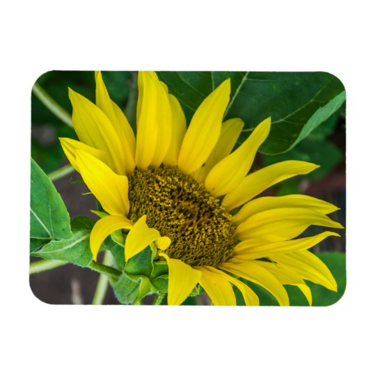 Sunflower fridge magnet