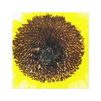 Sunflower Fun Canvas Print